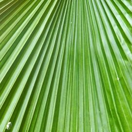Palm Leaf, Green, Gardens